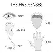 Five Senses Sensory Organs Chart