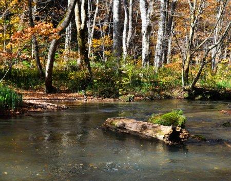 Photo pour Oirase Stream par temps ensoleillé, belle scène de feuillage d'automne dans les couleurs de l'automne. Fleuve coulant, roches mousseuses et chute d'eau dans le parc national de Towada Hachimantai, Aomori (Japon). - image libre de droit