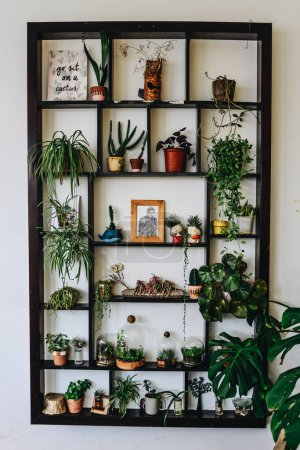 Photo for Dalat, Vietnam - Oct 26, 2019. Many green plants on wooden shelf for decoration at the rural house in Dalat, Vietnam. - Royalty Free Image