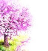 Flowering Sakura Tree.
