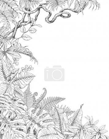 Illustration pour Branches dessinées à la main et feuilles de plantes tropicales. Fond tropique unilatéral avec espace pour le texte. Monstera, fougère, frondes de palmier, croquis de liane. Illustration noir et blanc coloriage pour adulte . - image libre de droit