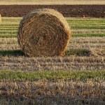 Hay rolls in autumn field...