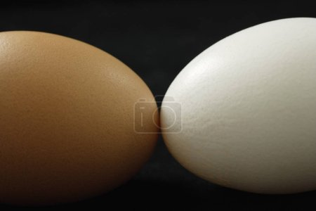 brown egg and white egg