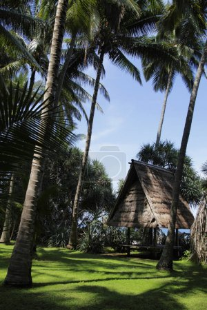 Thatched villas surrounded by greenery