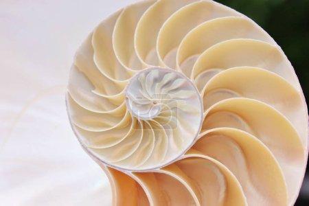 Photo pour Nautilus shell symétrie demi coupe transversale spirale Fibonacci structure de ratio d'or de près vers le haut de la mère de perle fermé en stock, photo, photographie, image, image, - image libre de droit