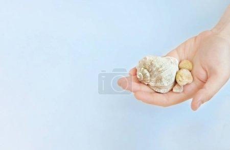 En la palma de una persona varias conchas marinas sobre un fondo azul. Mockup, espacio de copia... viaje a través de los ojos de la mente. ¿Quieres viajar