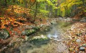 Beautiful autumn landscape with mountain river and colorful trees