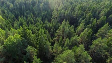 Photo pour Prise de vue aérienne d'une belle forêt Dense de l'été par une journée ensoleillée. - image libre de droit