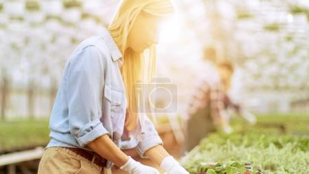Female Gardener Arranges Flowerpots in Neat Rows in a Sunny Indu