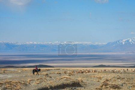 Girl shepherding herd of sheep in prairie