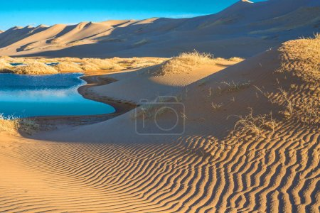 landscape of desert with little oasis