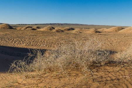 small bushes between sand dunes