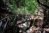 Wooden bridge in dark forest of Butterfly valley on Rhodes island, Greece