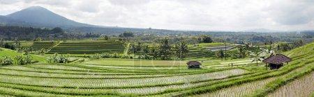 Panorama of layered rice fields Bali Indonesia