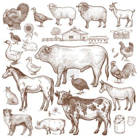 Animals cattle, poultry, pets, landscape.