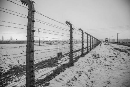 Barbed wire fences in Auschwitz II-Birkenau. The s...