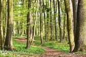Beautiful green forest in springtime. Nature background with sun.