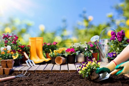 Gardening - Gardener Planting Pansy With Flowerpots And Tools