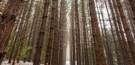 View of woods in winter, Ontario