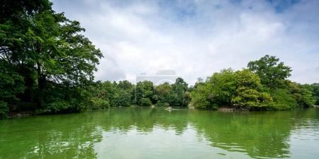 Green pond and trees in peaceful setting