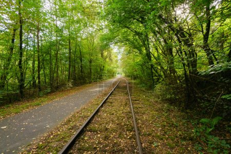 Empty train tracks leading off into distance through lush green forest