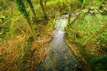 Foto de Pequeño arroyo natural que fluye a través de un exuberante bosque, alto ángulo, Bélgica - Imagen libre de derechos