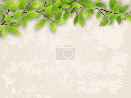 Illustration for Tree branch with green foliage on old plastered wall background. - Royalty Free Image