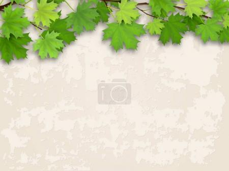 Illustration for Maple tree branch with green foliage on old plastered wall background. Vector realistic illustration. - Royalty Free Image