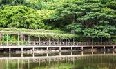 Wooden walkway in garden