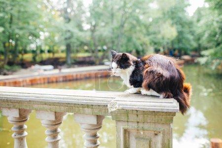 Photo pour Chat de rue noir et blanc. Chat errant, assis sur le trottoir d'un parc. La notion de problème des animaux sans abri. - image libre de droit