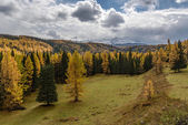 mountains snow forest coniferous autumn