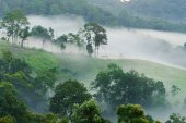 Morning fog in dense tropical rainforest, (Doi-Laung), Chiang-Da