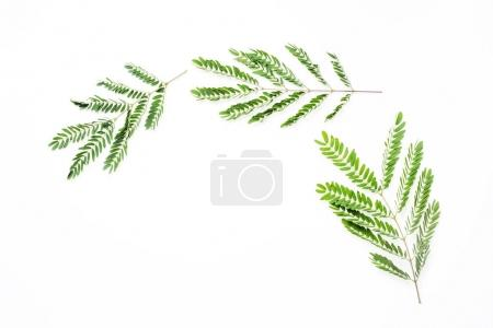 Photo for Frame with leaves isolated on white background. flat lay, overhead view - Royalty Free Image