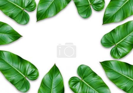 Photo for Green leaves frame isolated on white background. - Royalty Free Image