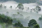 Morning fog in dense tropical rainforest, (Doi-Laung), Chiang-Da
