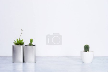 Photo for Collection of various cactus and succulent plants in different pots. - Royalty Free Image