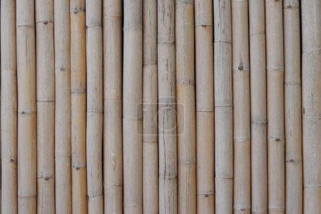 Fond brun sec motif bambou. Fond de bambou sec .