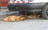 Two Dogs Sleeping on Street