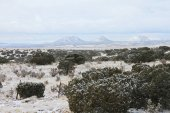 Snowy Landscape in Santa Fe, New Mexico with Junipers