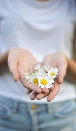 white flowers in the hand