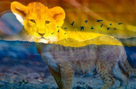 Wonderful image of Cute Lion baby looking...