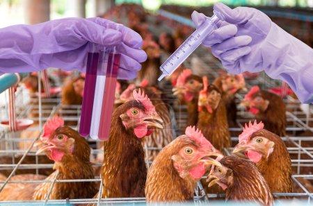 Photo pour Ferme de poulets aux œufs avec laboratoire chimique, main tenant les tubes avec des flacons d'essai - image libre de droit