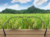 rice field focused in glasses