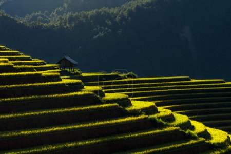 traditional house with Rice fields