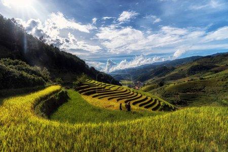 rice fied terrace