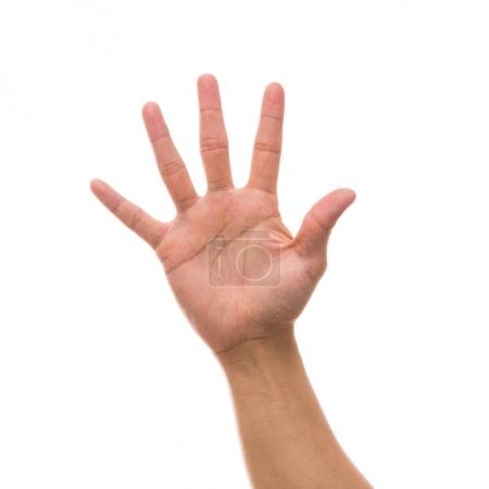 hand showing the number five over white background, include clipping path