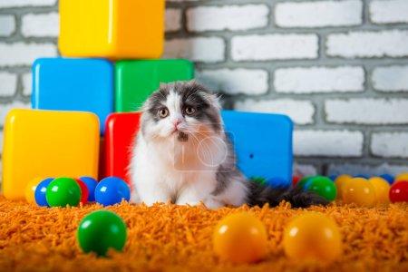 Portrait of an ordinary kitten