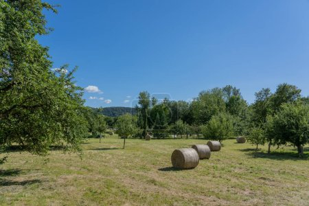 Hay bales in summer on big meadow with blue sky and white clouds.