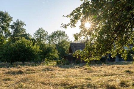 Foin sec tranché en été au soleil du soir avec hangar et forêt en arrière-plan. Soleil étoilé entre les feuilles. Scène rurale, Suisse .