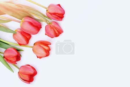Photo for Easter egg. funny holiday bunny rabbit and eggs Bunch of flowers for womens day. Tulips in pink or red colors isolated on white background, copy space. Bouquet of spring tulips - Royalty Free Image